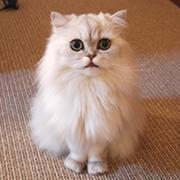 ハンドメイド作家のお店「猫とエトワレ」