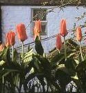 沼ノ上農園の花日記