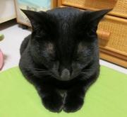 黒猫にゅに友達ができました