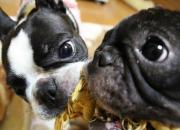 たま&ふく犬種は違えど仲良し姉妹
