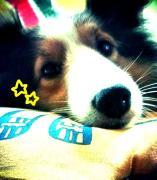 Minaminの日常と趣味と愛犬ジーニーのぶろぐ