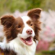おてんばティラと保護犬リルサのチャレンジ日記