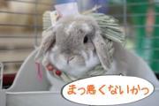 東北のうさぎ専門店Rabbit`sFarm