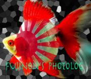 FUJINON's  Photolog