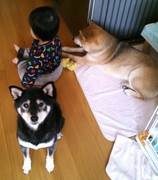 躁鬱・愛着障害の私と息子と柴犬