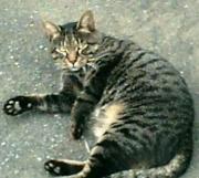 日々是ねこパト(sakki が繋ぐ地域猫活動)