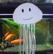 Jellyfish☆ くらげ番長、泳いでます。