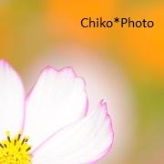 chiko*photoさんのプロフィール