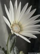 花咲かぺんぎん