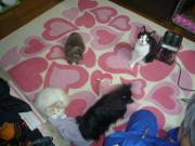 アメコミ馬鹿の猫ブログ
