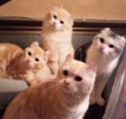9匹の猫に乗っ取られた我が家は崩壊寸前の巻