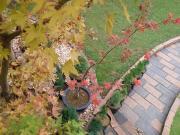 たまたま庭 花木館