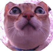 猫のミタ・シンガプーラのプー 動画や写真でニャンコ