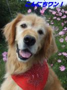 笑顔デリバリー犬 中学英語でアメリカ生活奮闘日記