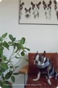 dog salon ママコナ