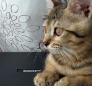ベンガル猫と針と糸