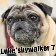 Luke's Blog [episode:4]