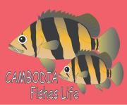 cambodia-fishes-life