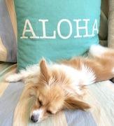 クプラウのハワイ的生活