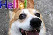 DOG HILLでコーギーライフ