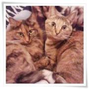 一人暮らしの猫ブログ-ぬこねこ