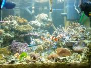 海水 趣味の部屋