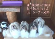 岐阜のドッグヨガ☆セルフケアサロンすずき