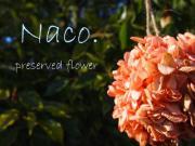 Naco.