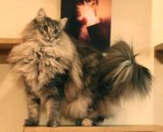 もふ猫「乙姫」物語