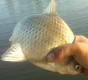 びん沼 荒川支流 へら鮒釣り紀行
