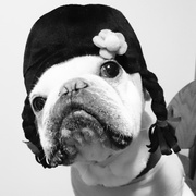 ロンジャミンバトン 数奇な犬生