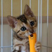 気のむくままに〜猫たちからの贈り物〜