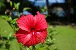 フィジー親子留学のブログ