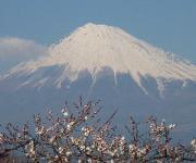 富士山を世界遺産に