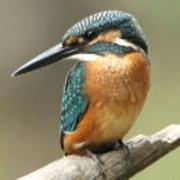 わたっちの野鳥日記
