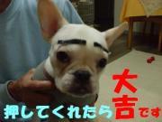 BUHI  FUNNY TALK 吉川大吉商店