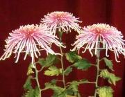 花咲か爺のブログ