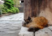 長崎猫さるくブログ