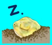 〜溺れるカエル〜