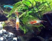 熱帯魚・シュリンプ + お買い物
