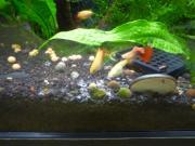 簡単な熱帯魚の飼育方法