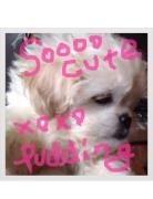 ぷりんのブログ