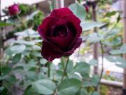 花咲く お庭から