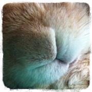 ♪  うささ   ♪  のブログ  Part2