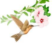 花の通信〜花の店アンフィニのスタッフブログ