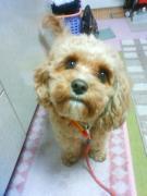 可愛い愛犬