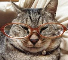 猫様のしもべ マメゴコロ