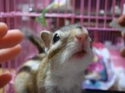 小さなprincesse♪