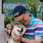 柴犬の柴くん・Returns!