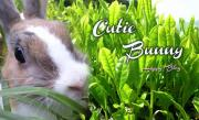 Cutie Bunnyさんのプロフィール
